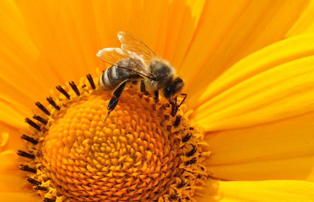 Опыление растений насекомыми