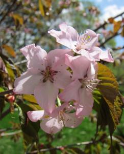 Цветковые растения фото