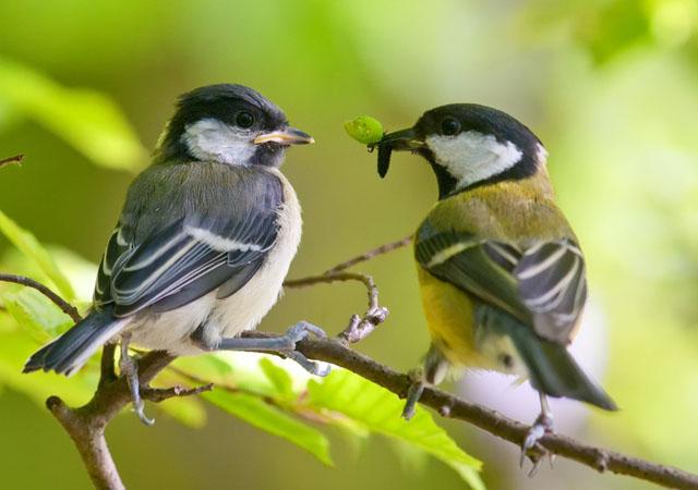 Птицы - борьба с тлей