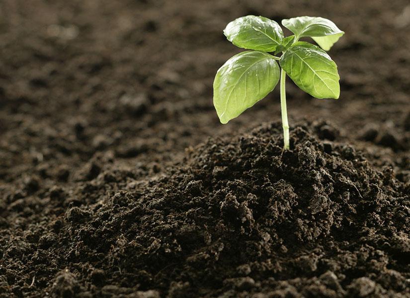 органические удобрения сапропель