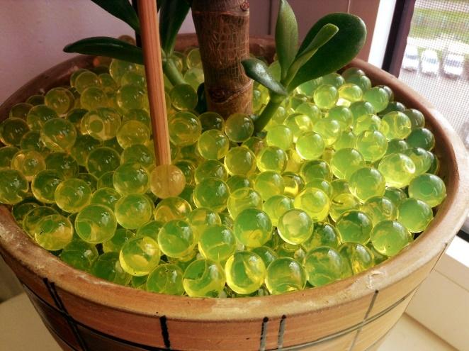 цветной гидрогель для растений