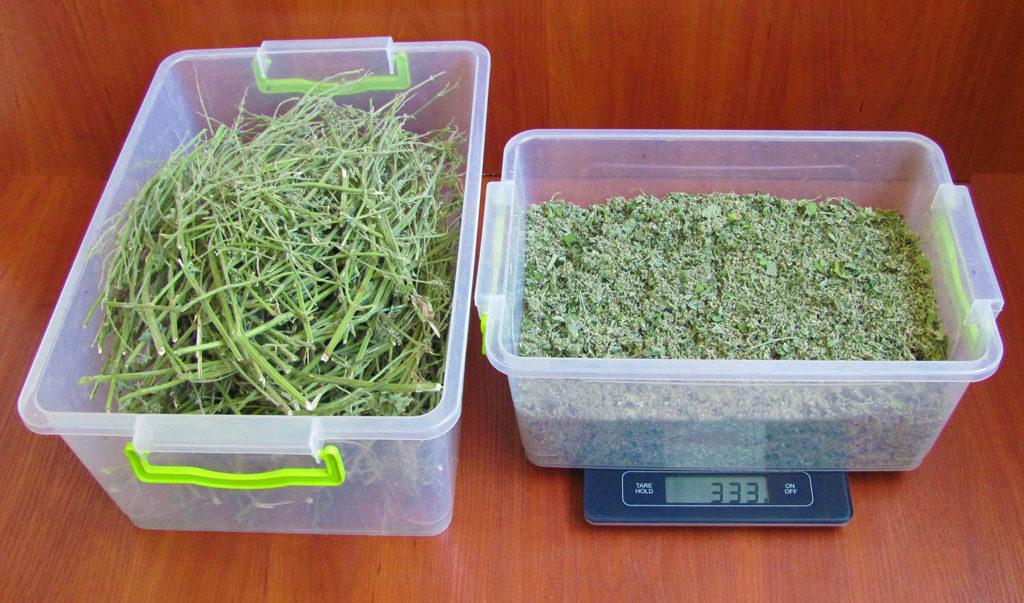 мелисса трава польза и вред