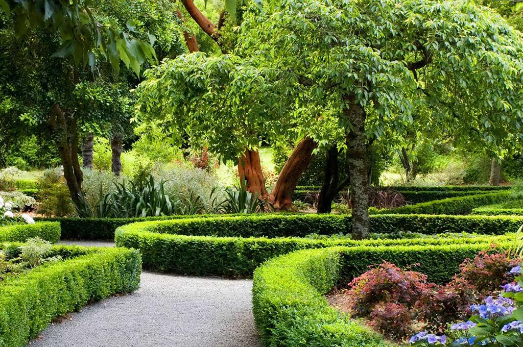 Быстрорастущие растения для изгороди в саду